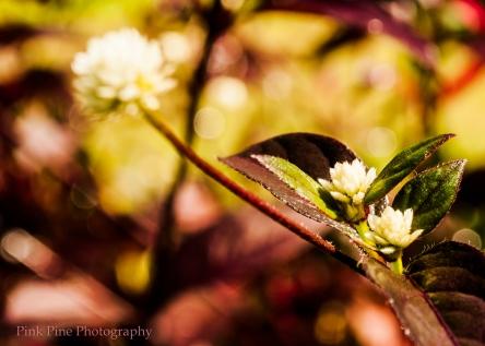 White Palawan Flower