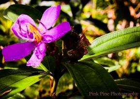 Purple Flower Port Barton