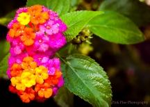 Vibrant floral Port Barton